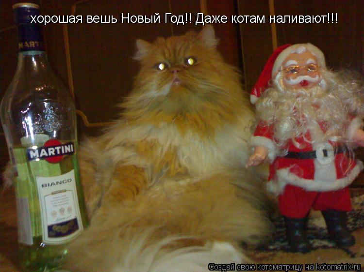 Котоматрица: хорошая вешь Новый Год!! Даже котам наливают!!! хорошая вешь Новый Год!! Даже котам наливают!!!