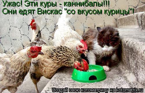 "Котоматрица: Ужас! Эти куры - каннибалы!!! Они едят Вискас ""со вкусом курицы""!"