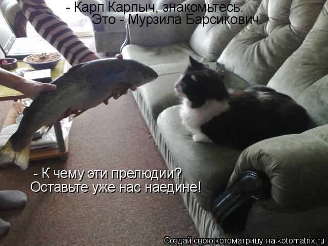 Котоматрица: - Карп Карпыч, знакомьтесь. Это - Мурзила Барсикович. - К чему эти прелюдии? Оставьте уже нас наедине!