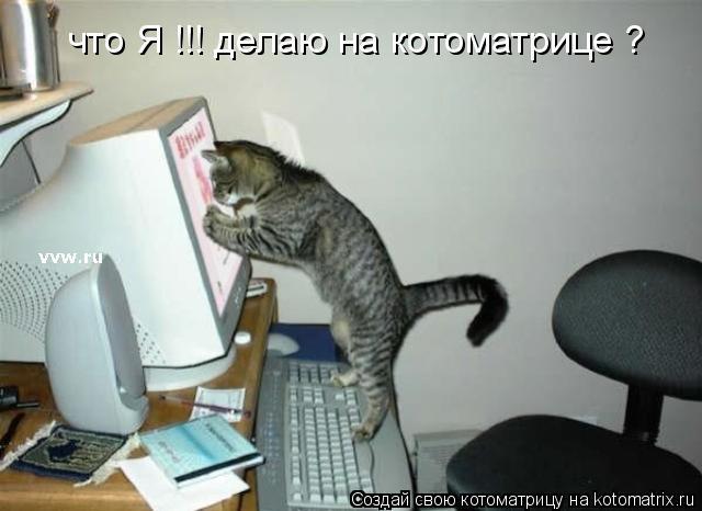 Котоматрица: что Я !!! делаю на котоматрице ?