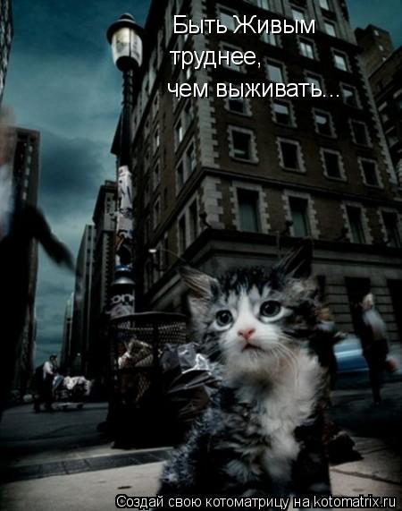 Котоматрица: Быть Живым труднее, чем выживать...