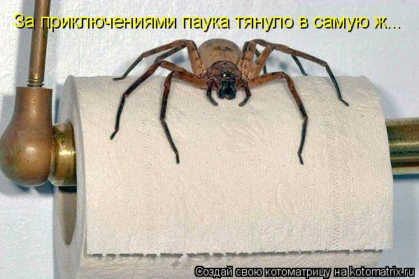 Котоматрица: За приключениями паука тянуло в самую ж...