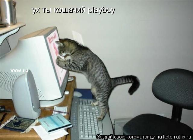 Котоматрица: ух ты кошачий playboy
