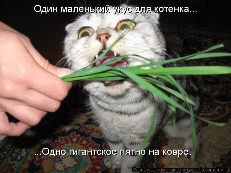 Котоматрица: Один маленький укус для котенка... ...Одно гигантское пятно на ковре.