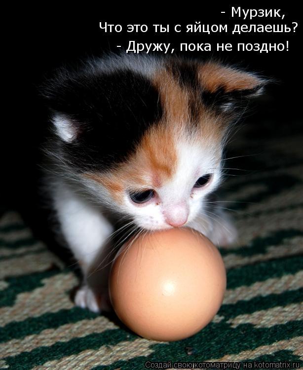 Котоматрица: - Мурзик,  Что это ты с яйцом делаешь?  - Дружу, пока не поздно!
