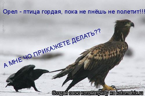 Котоматрица: Орел - птица гордая, пока не пнёшь не полетит!!!! А МНЕ ЧО ПРИКАЖЕТЕ ДЕЛАТЬ??