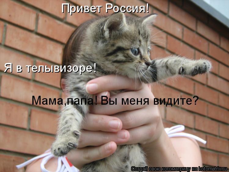 Котоматрица: Привет Россия! Мама,папа! Вы меня видите? Я в телывизоре!