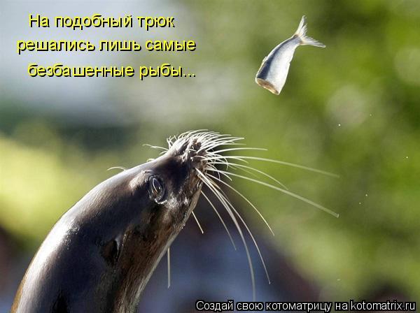 Котоматрица: На подобный трюк решались лишь самые безбашенные рыбы...
