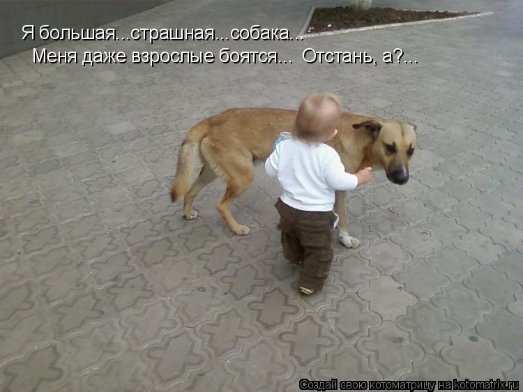 Котоматрица: Я большая...страшная...собака... Меня даже взрослые боятся... Отстань, а?...