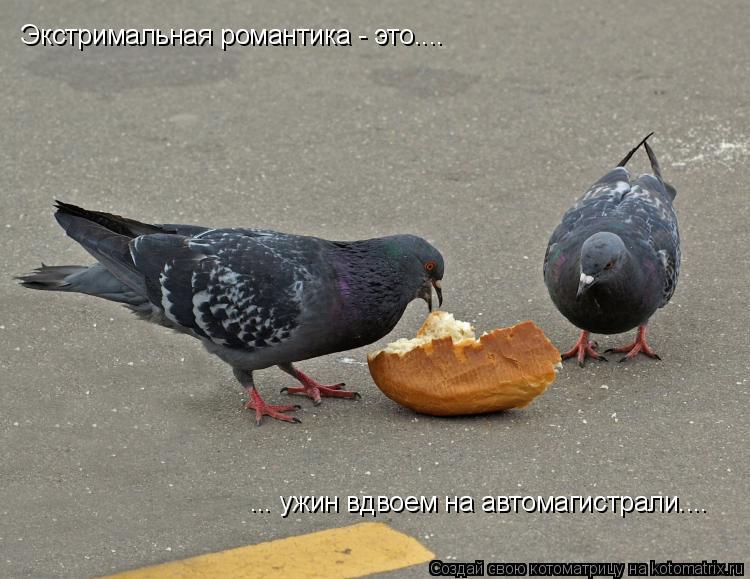 Котоматрица: Экстримальная романтика - это.... ... ужин вдвоем на автомагистрали....