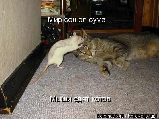 Котоматрица: Мир сошол сума... Мыши едят котов