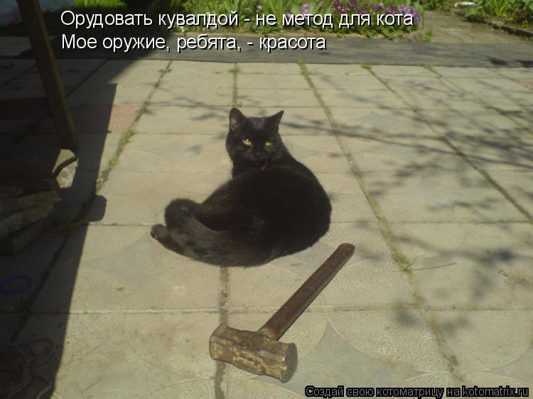 Котоматрица: Орудовать кувалдой - не метод для кота Мое оружие, ребята, - красота Мое оружие, ребята, - красота