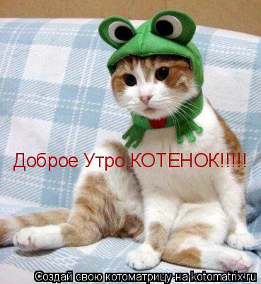 Доброе утро котенок картинки обзор рунета