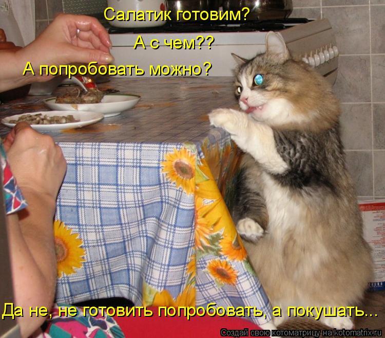 Котоматрица: Салатик готовим? А с чем?? А попробовать можно? Да не, не готовить попробовать, а покушать...