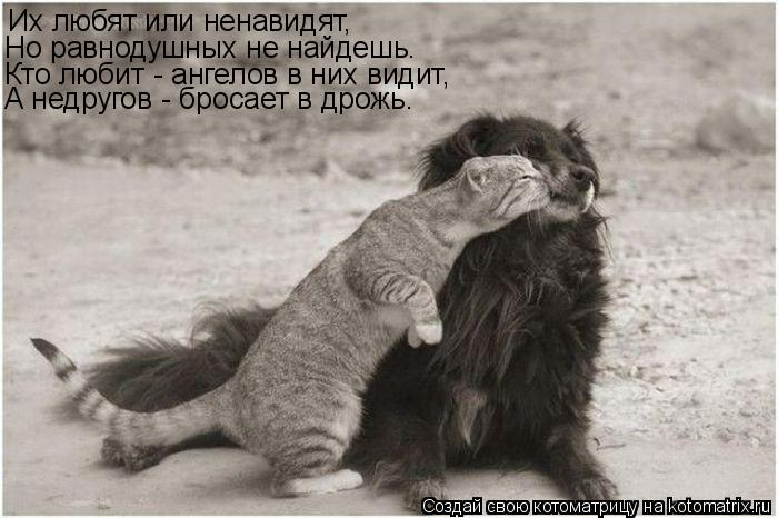 Котоматрица: Их любят или ненавидят, Но равнодушных не найдешь. Кто любит - ангелов в них видит, А недругов - бросает в дрожь.