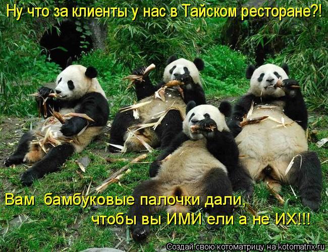 Котоматрица: Вам  бамбуковые палочки дали,  чтобы вы ИМИ ели а не ИХ!!! Ну что за клиенты у нас в Тайском ресторане?!