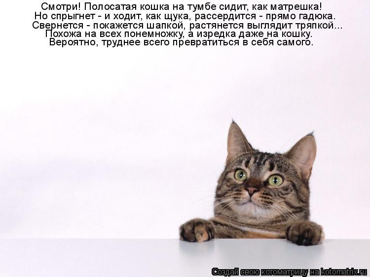 Котоматрица: Смотри! Полосатая кошка на тумбе сидит, как матрешка! Но спрыгнет - и ходит, как щука, рассердится - прямо гадюка. Свернется - покажется шапкой