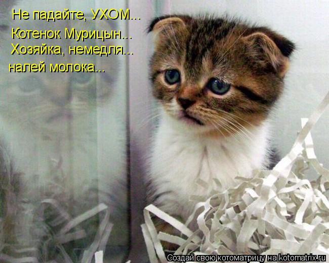 Котоматрица: Не падайте, УХОМ... Котенок Мурицын... Хозяйка, немедля... налей молока...