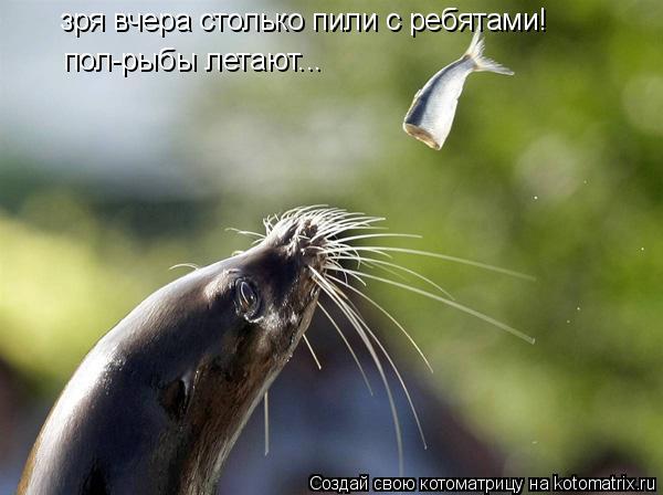 Котоматрица: зря вчера столько пили с ребятами! пол-рыбы летают...