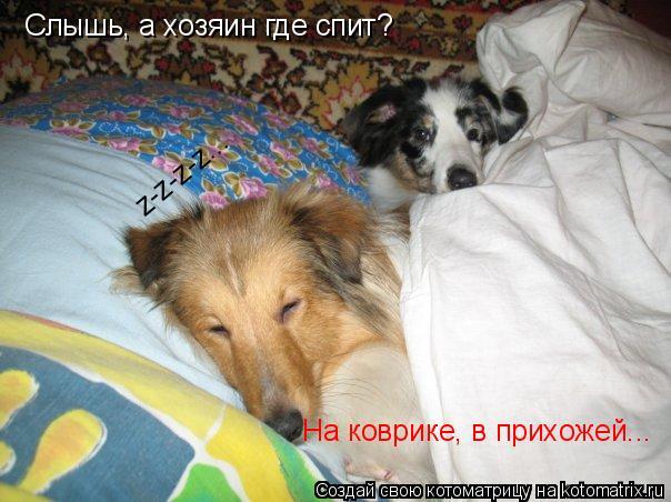 Котоматрица: Слышь, а хозяин где спит? На коврике, в прихожей... z-z-z-z...