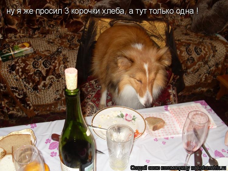 Котоматрица: ну я же просил 3 корочки хлеба, а тут только одна !