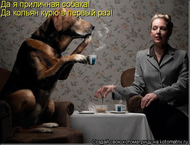 Котоматрица: Да я приличная собака! Да кольян курю в первый раз!