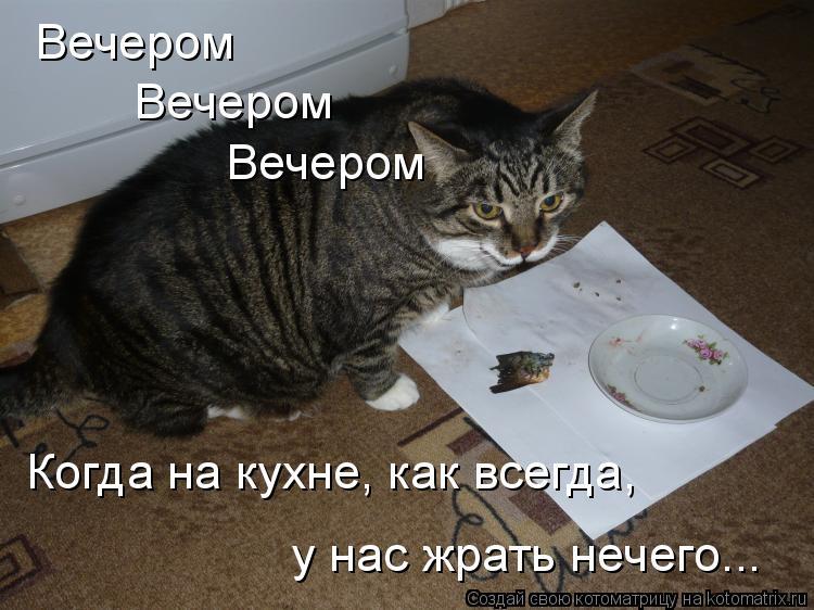 Котоматрица: Вечером Вечером Вечером Когда на кухне, как всегда, у нас жрать нечего...