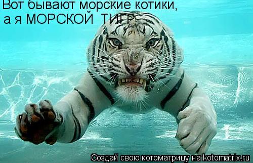 Котоматрица: Вот бывают морские котики,  а я МОРСКОЙ  ТИГР