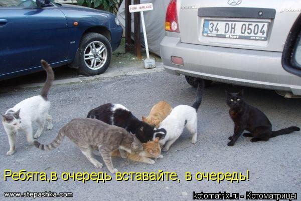 Котоматрица: Ребята,в очередь вставайте, в очередь!