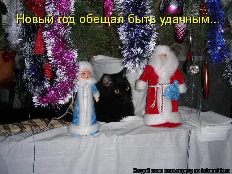 Котоматрица: Новый год обещал быть удачным...