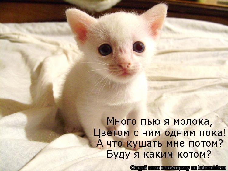 Котоматрица: Много пью я молока, Цветом с ним одним пока! А что кушать мне потом? Буду я каким котом?