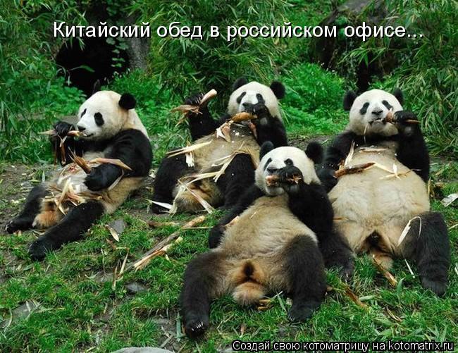 Котоматрица: Китайский обед в российском офисе...