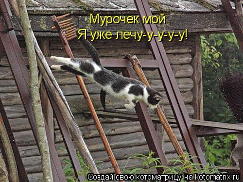 Котоматрица: Мурочек мой Я уже лечу-у-у-у-у!