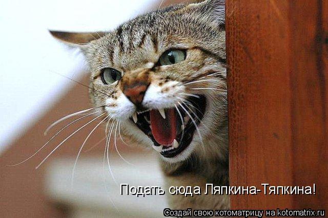 Котоматрица: Подать сюда Ляпкина-Тяпкина!