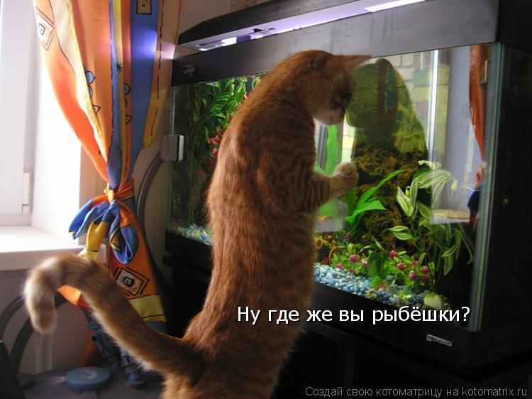 Котоматрица: Ну где же вы рыбёшки?