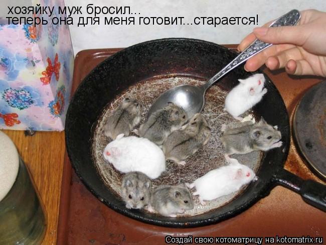 Котоматрица: хозяйку муж бросил... теперь она для меня готовит...старается!