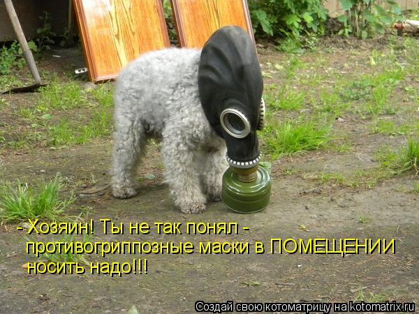 Котоматрица: - Хозяин! Ты не так понял - противогриппозные маски в ПОМЕЩЕНИИ  носить надо!!!