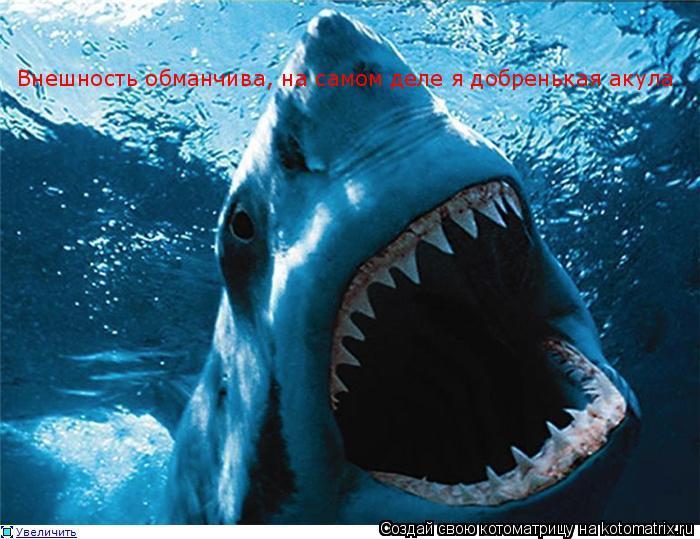 Котоматрица: Внешность обманчива, на самом деле я добренькая акула