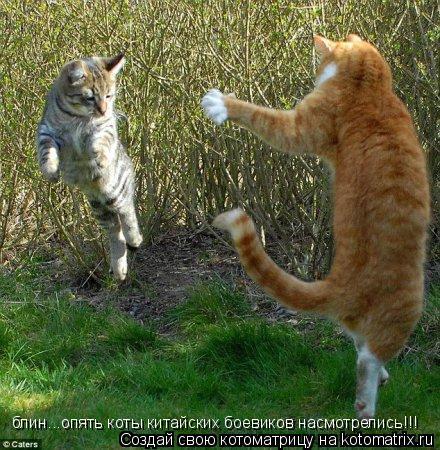 Котоматрица: блин...опять коты китайских боевиков насмотрелись!!!