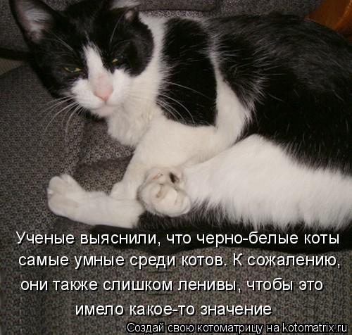 Котоматрица: Ученые выяснили, что черно-белые коты самые умные среди котов. К сожалению,  они также слишком ленивы, чтобы это имело какое-то значение