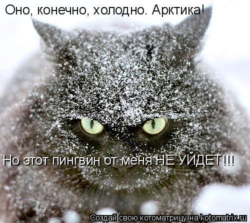 Котоматрица: Оно, конечно, холодно. Арктика! Но этот пингвин от меня НЕ УЙДЕТ!!!