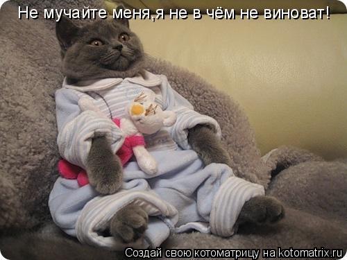 Котоматрица: Не мучайте меня,я не в чём не виноват!