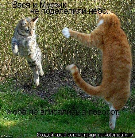 Котоматрица: Вася и Мурзик  не поделелили небо... ..и оба не вписались в поворот...