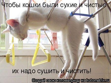 Котоматрица: Чтобы кошки были сухие и чистые их надо сушить и чистить!