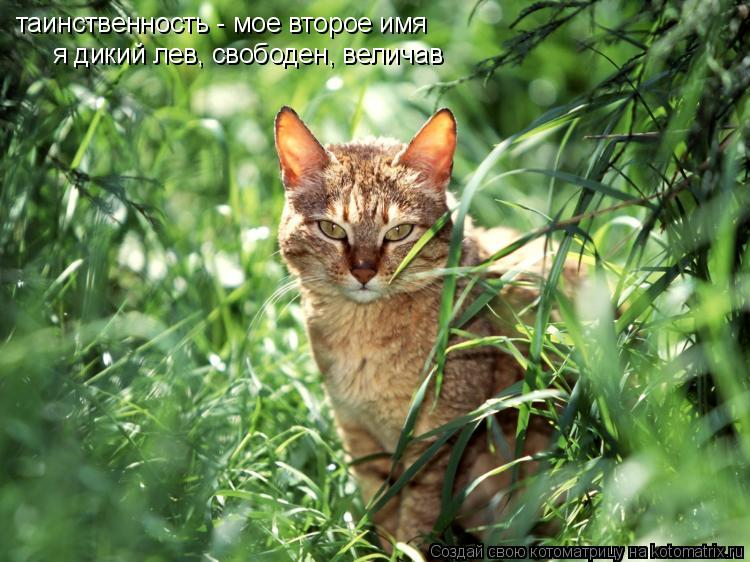 Котоматрица: таинственность - мое второе имя я дикий лев, свободен, величав
