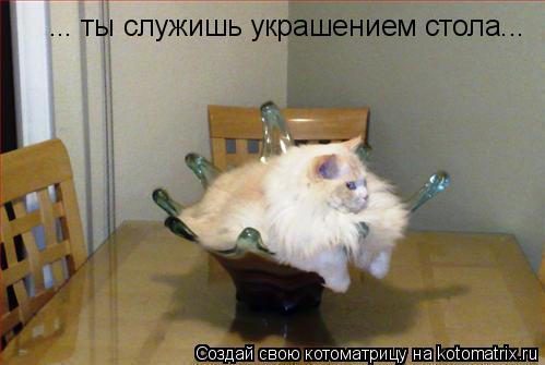 Котоматрица: ... ты служишь украшением стола...