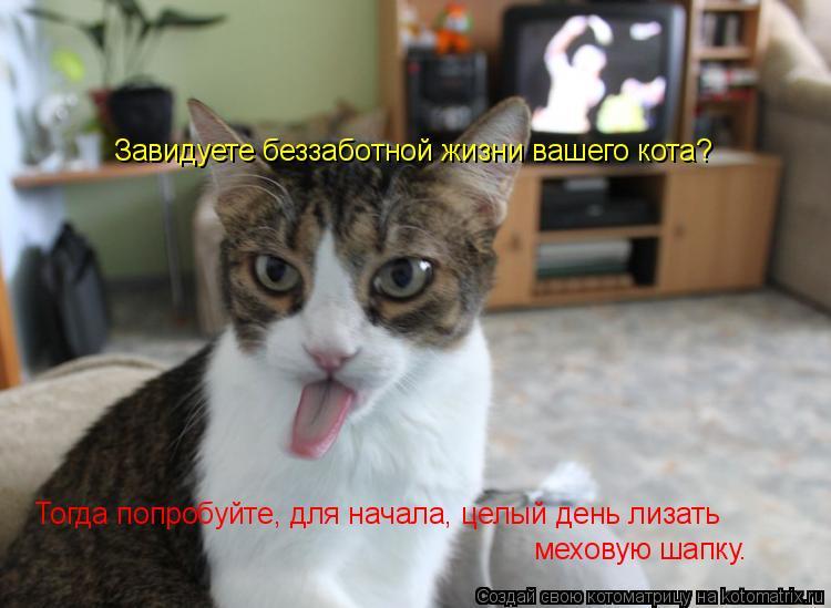 Котоматрица: Завидуете беззаботной жизни вашего кота?  Тогда попробуйте, для начала, целый день лизать  меховую шапку…