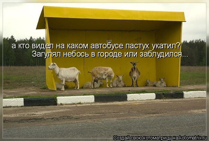 Котоматрица: а кто видел на каком автобусе пастух укатил? Загулял небось в городе или заблудился...