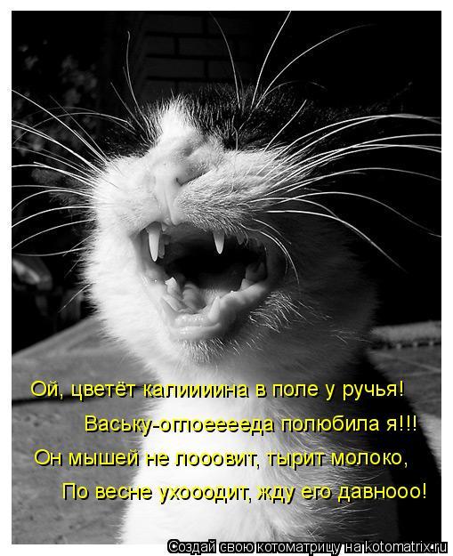 Котоматрица: Ой, цветёт калиииина в поле у ручья! Ваську-оглоееееда полюбила я!!! Он мышей не лооовит, тырит молоко, По весне ухооодит, жду его давнооо!