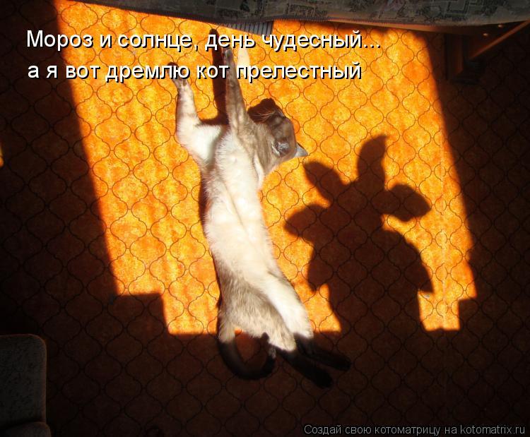 Котоматрица: Мороз и солнце, день чудесный... а я вот дремлю кот прелестный
